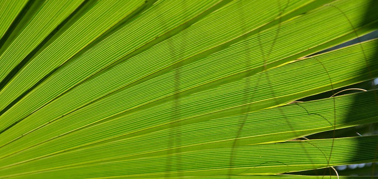 Palmový olej ve vlasové kosmetice