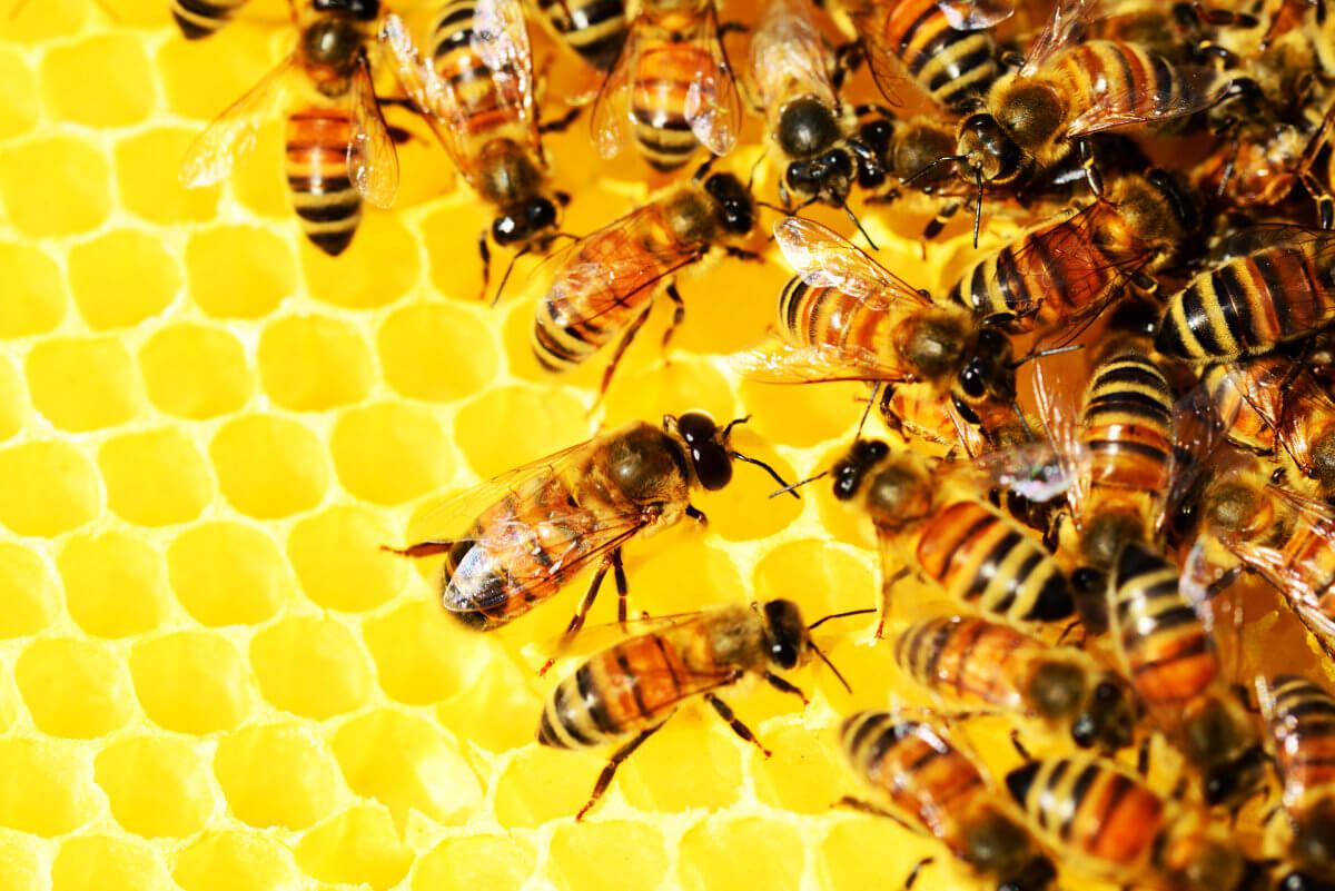 Byotea Veleno d'Ape s obsahem včelího jedu je určena pro boj proti známkám stárnutí