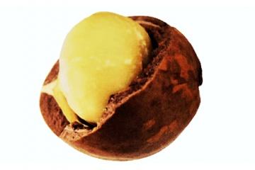 Olej z makadamových ořechů